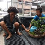 Polisi Cyduk Pelaku Pencuri Tanaman Bonsai