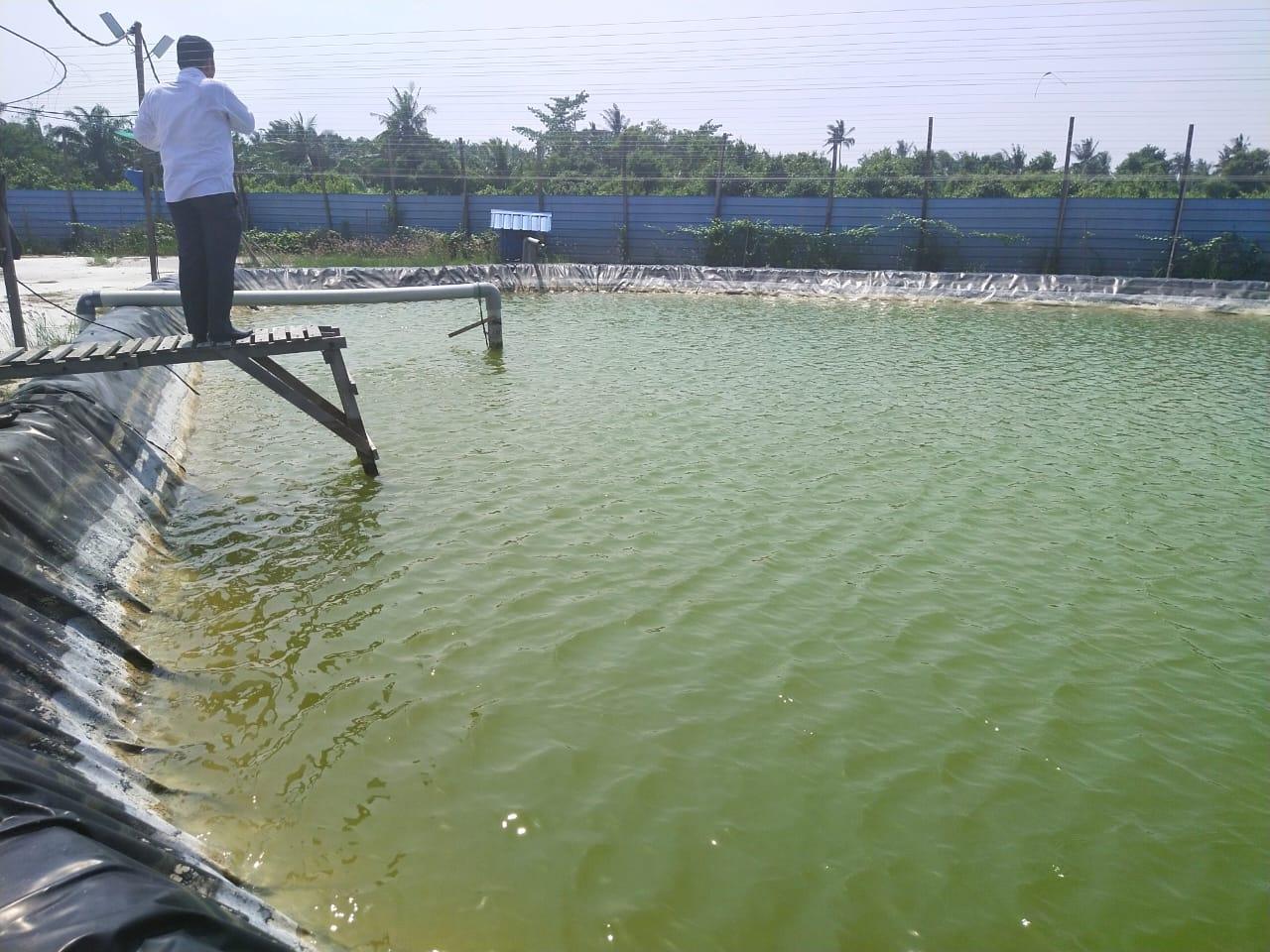 Dinas Lingkungan Hidup Sidak Tambak Udang